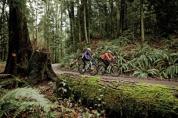 visit forest park in Portland