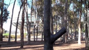 Talking Trees at UC San Diego